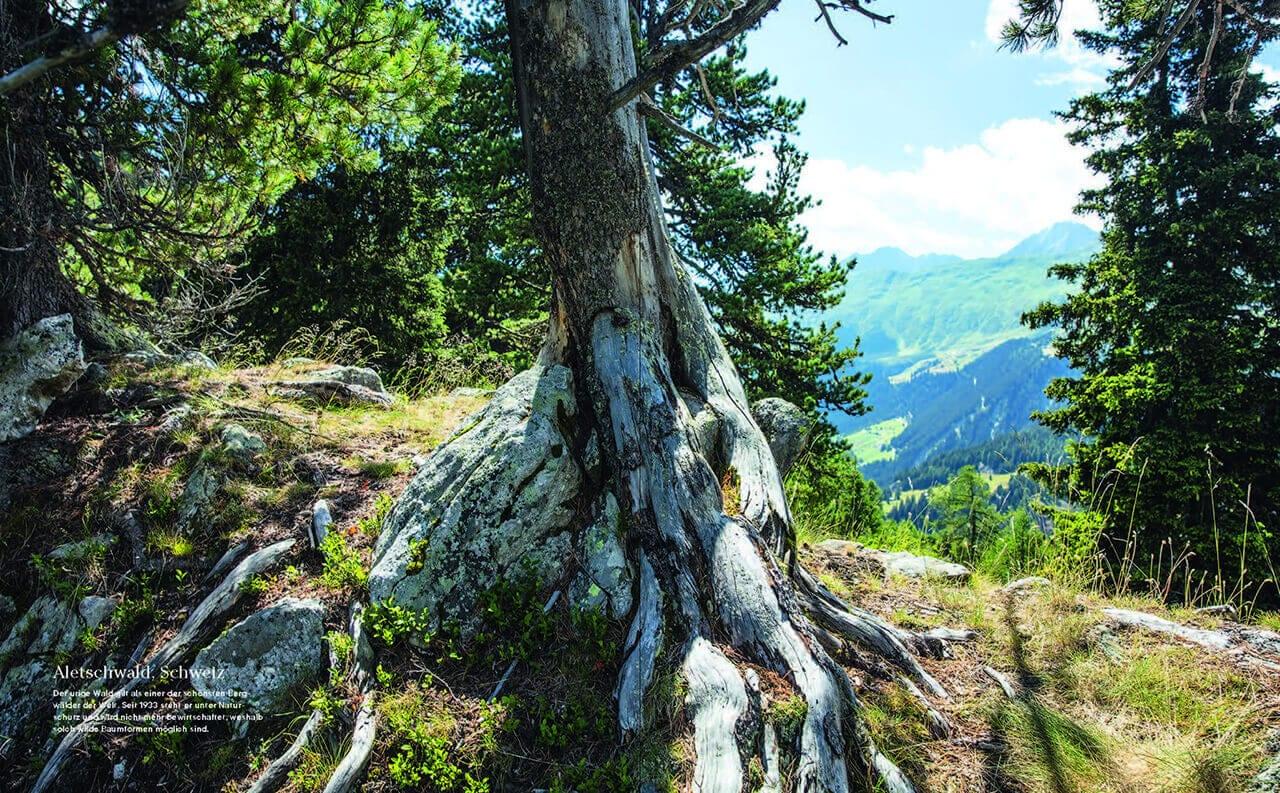 Bild eines Waldes aus dem Natur Buch Into the Woods aus dem Prestel Verlag zum Thema Wanderlust