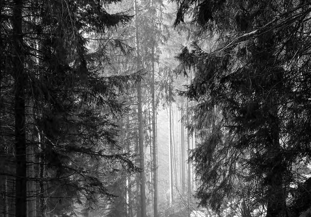 Schwarz Wald Land seltmann+söhne Verlag