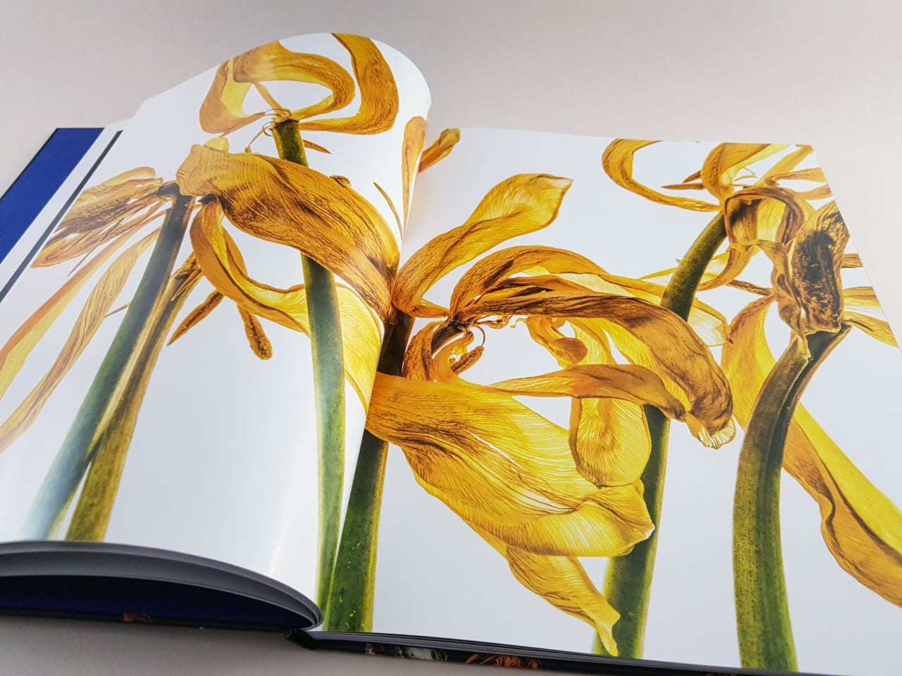 Fading Beauty Kerber Verlag aufgeschlagener Bildband
