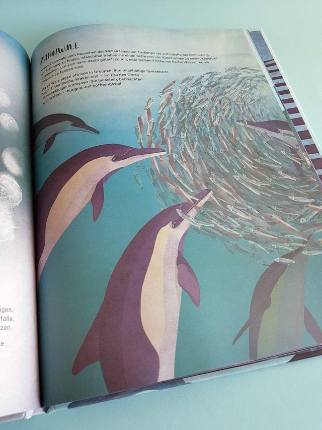 Das geheime Leben der Wale Aladin Verlag aufgeschlagenes Kinderbuch