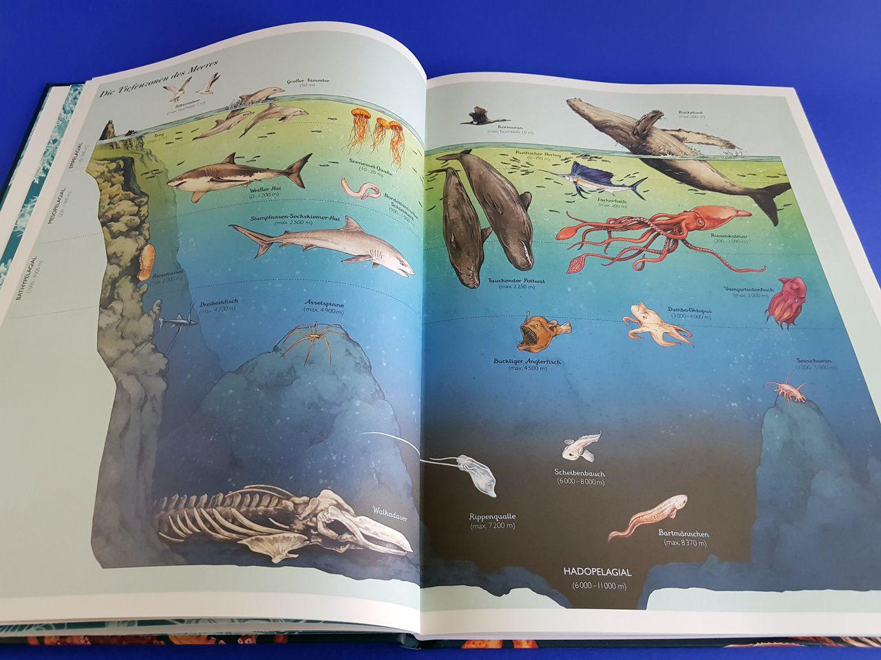 Das Museum des Meeres Eintritt frei Prestel Verlag aufgeschlagenes Buch